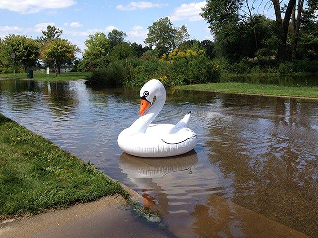 Cover-flood-swan-crVirginiaGunderson-08302018.jpg