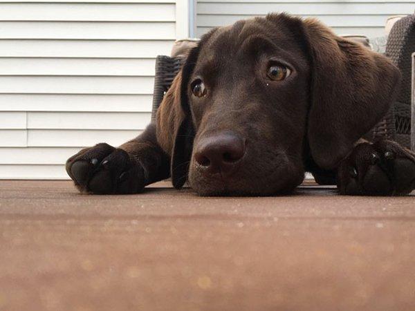 Dog-Issue-Izzy-Hopper-11222018.jpg