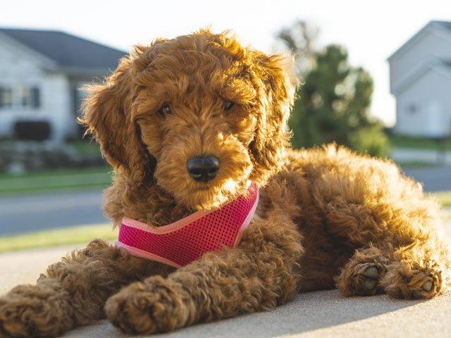 Dog-Issue-Bucky-Bruner-11222018.jpg
