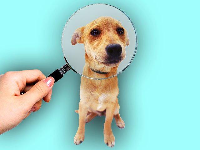 Dog-Adoption-11222018.jpg