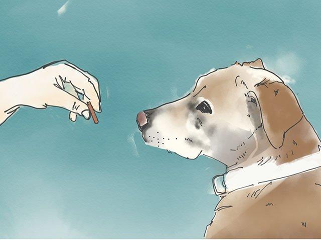 Cover-Dog-Training-crMasarahVanEyck-11222018.jpg