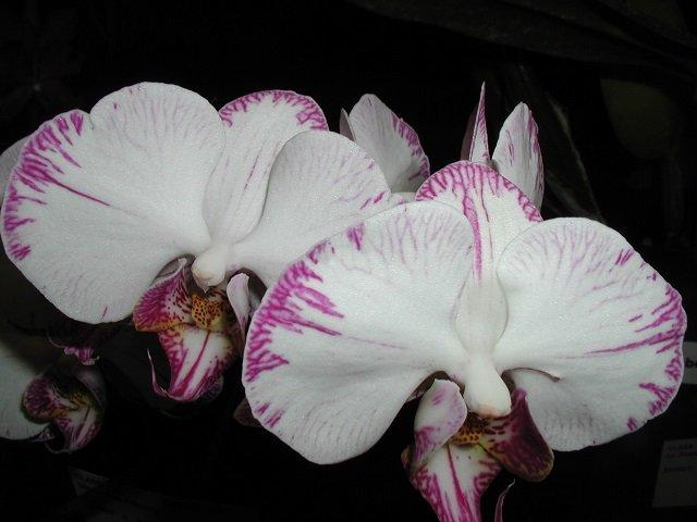 calendar-Orchid-Quest.jpg
