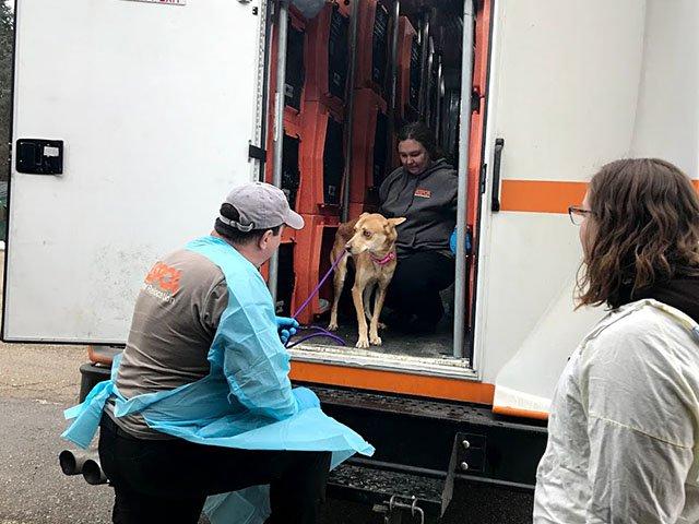 Snapshot-immigrant-dogs-crJoeTarr-02142019.jpg