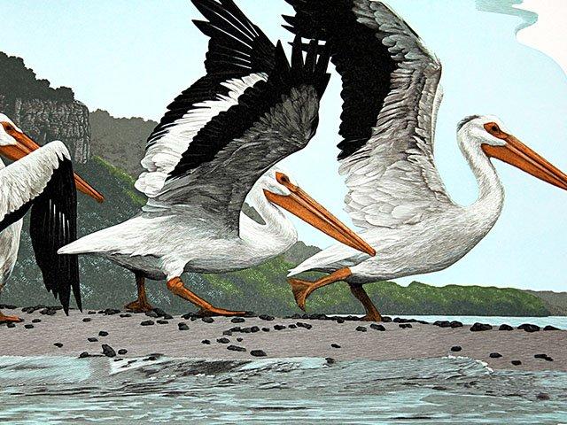 Art-Schanilec-Gaylond-Pelecanus-erythrorhynchos-03212019.jpg