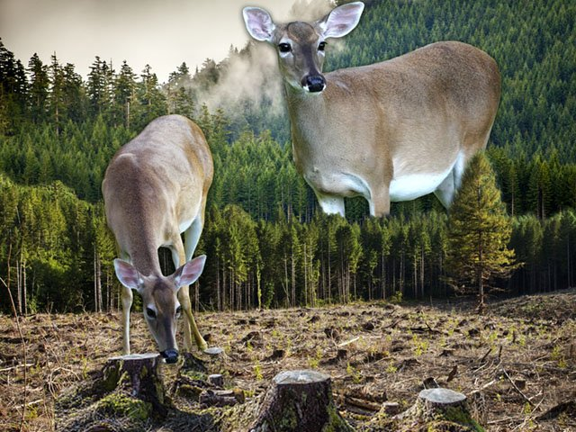 News-Deer-Destruction-crToddHubler-10242019.jpg