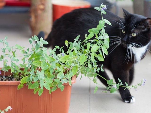 Food-Catnip-11282019.jpg