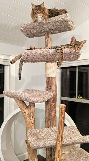 Emphasis-Pet-Friendly-Cat-Furniture-aside-11282019.jpg