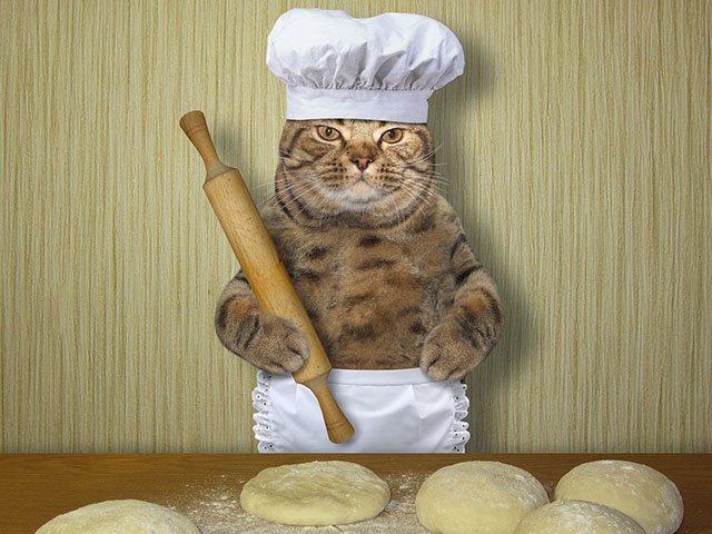 Cat-Jokes-Baker-11282019.jpg