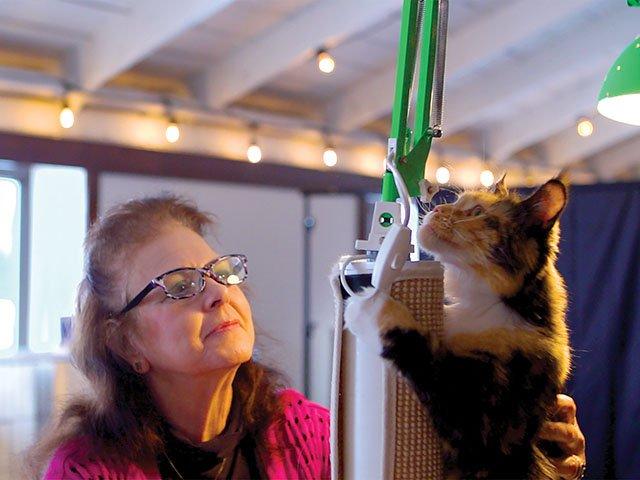 Snapshot-Cat-Show_crKoriFeener11282019.jpg