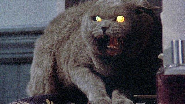 Screens-Cats-Pet-Sematary-11282019.jpg