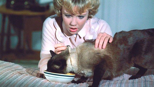 Screens-Cats-That-Darn-Cat-11282019.jpg