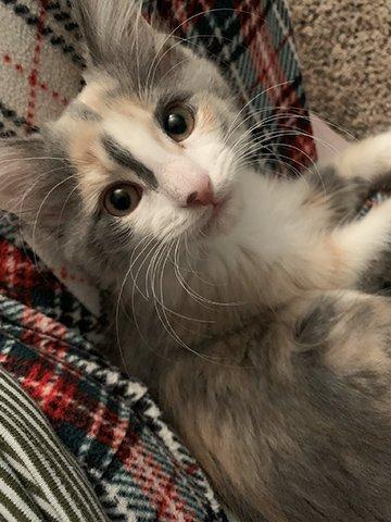 Baby Elinor-12-2-2019.jpg