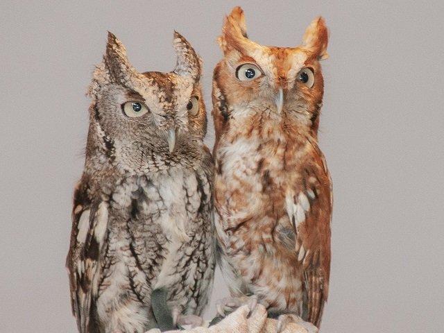 calendar-owls.jpg
