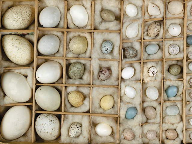 Picks-Wis-Academy-Eggs_crAndyKraushaar02202020.jpg