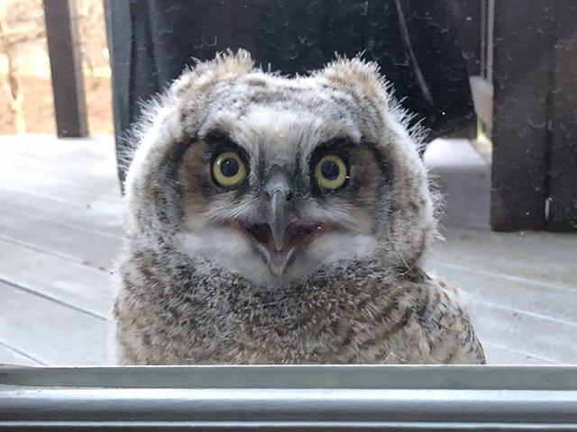 Web-Ollie-the-Owl-04-20-2020.jpg