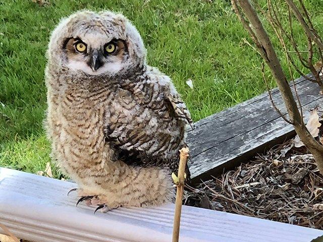 Web-Ollie-the-Owl3-04-20-2020.jpg