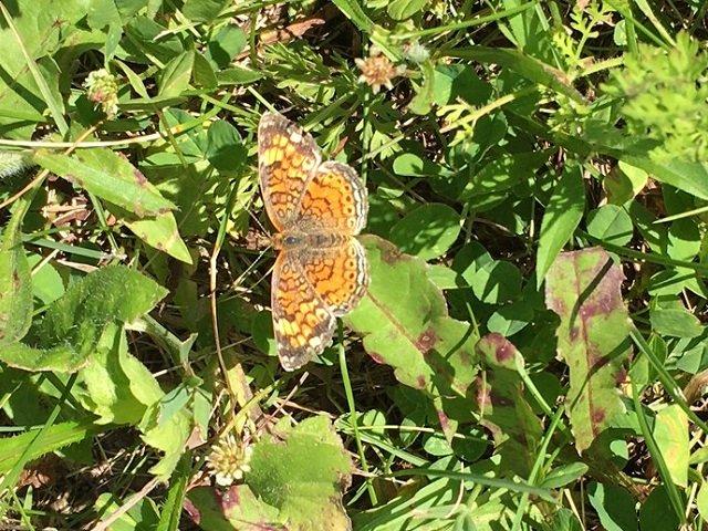 calendar-butterfly.jpg