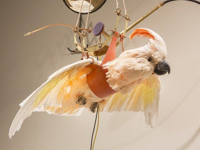 calendar-Martha-Glowacki-Deconstructing-Flight.jpg