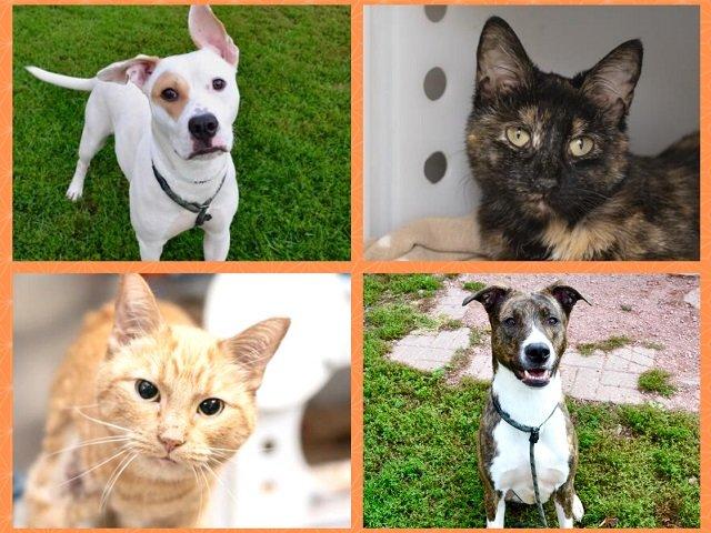 calendar-DCHS-Pet-Adoption-Week.jpg