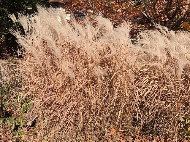 calendar-ornamental-grasses-bk.jpg