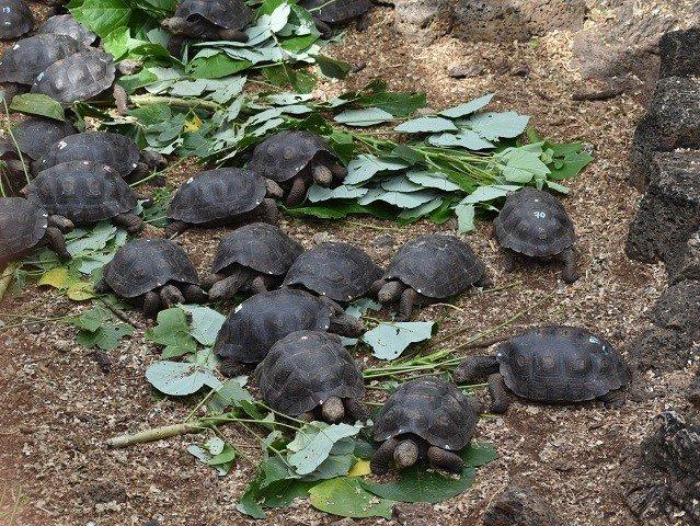calendar-galapagos-tortoises-GettyImages.jpg