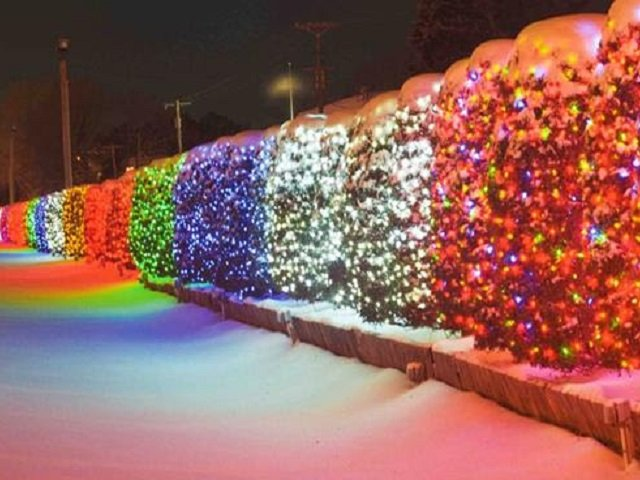 calendar-University-Avenue-Holiday-Lights-cr-Jon-Pfeiffer.jpg