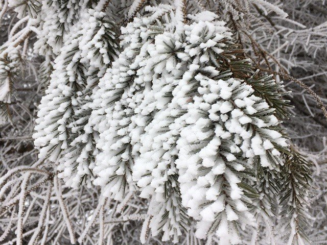 calendar-winter-ice-rime-bk.jpg