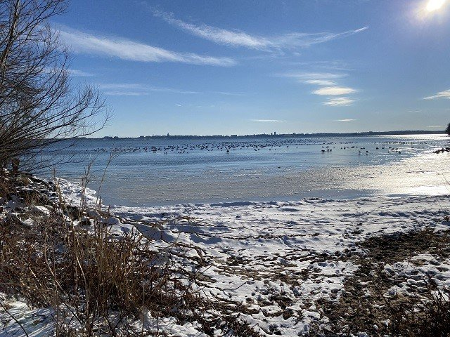 calendar-Lake-Mendota-geese-bk.jpg