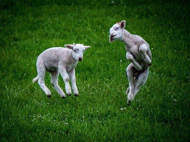 calendar-sheep-cr-liam-read-vWfcZ6Fv2yU-unsplash-ic.jpg