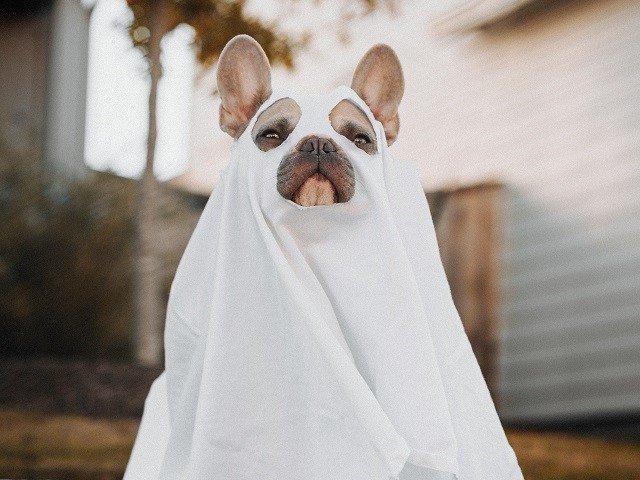 calendar-ghost-dog-cr-karsten-winegeart-lKAxn648B7A-unsplash.jpg