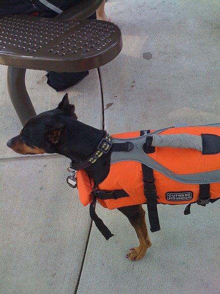 dogswim090809a.jpg